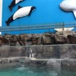 松島水族館が閉館へ!飼育している生き物の移転先は?