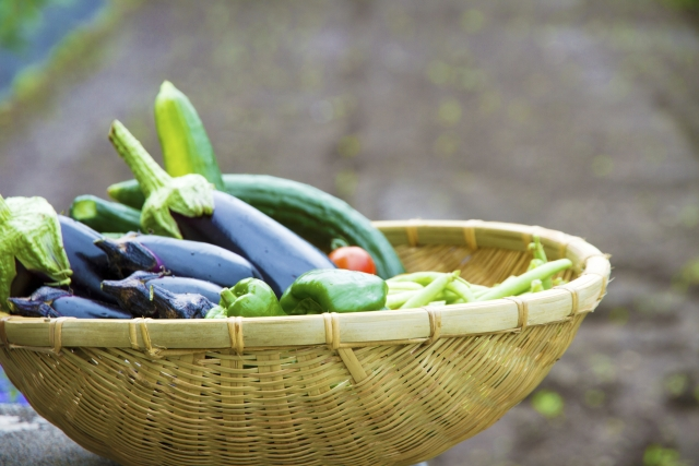 夏料理のレシピ☆和食で人気があって簡単に作れるものと言えば?