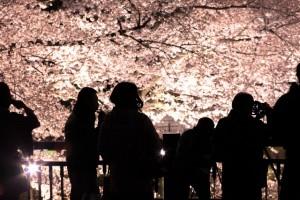 桜,名所,東京,ライトアップ