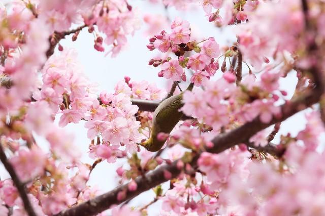 北本市にある桜の名所はたくさん!春に行くべき桜のスポットとは?