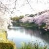 高松市にある桜の名所はどんな所がある?オススメスポット3つ