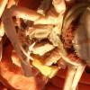 セコガニのボイル☆食べ方で美味しくいただく方法やコツは?